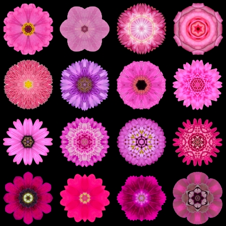 Big Collection of Various Purple Flowers. Kaleidoscopic Mandala Patterns Isolated on Black Background. Concentric Rose, Daisy, Primrose, Sunflower, Carnation, Marigold, Gerber, Dahlia Zinnia Flowers in Yellow and Purple colors. photo