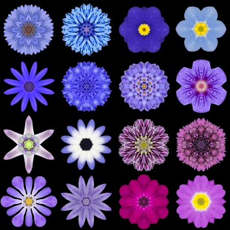 Big Collection of Various Blue Flowers. Kaleidoscopic Mandala Patterns Isolated on Black Background. Concentric Rose, Daisy, Primrose, Sunflower, Carnation, Marigold, Gerber, Dahlia Zinnia Flowers in Blue colors. photo