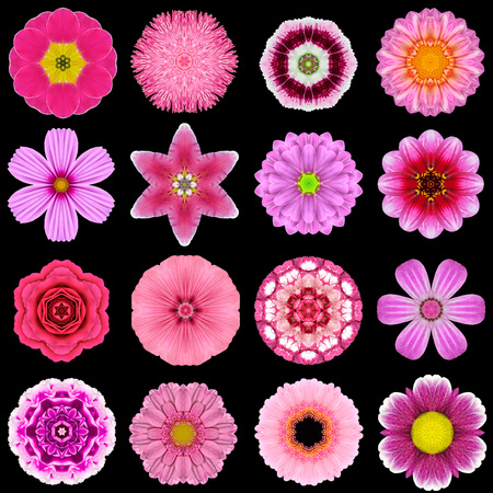 Big Collection of Various Purple Flowers. Kaleidoscopic Mandala Patterns Isolated on Black Background. Concentric Rose, Daisy, Primrose, Sunflower, Carnation, Marigold, Gerber, Dahlia Zinnia Flowers in Pink and Purple colors. photo