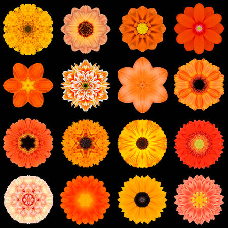 Big Collection of Various Orange Flowers. Kaleidoscopic Mandala Patterns Isolated on Black Background. Concentric Rose, Daisy, Primrose, Sunflower, Carnation, Marigold, Gerber, Dahlia Zinnia Flowers in Orange colors. photo