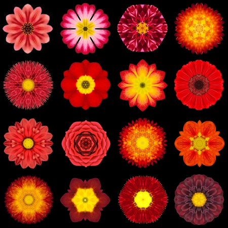 Big Collection of Various Red Flowers. Kaleidoscopic Mandala Patterns Isolated on Black Background. Concentric Rose, Daisy, Primrose, Sunflower, Carnation, Marigold, Gerber, Dahlia Zinnia Flowers in Red colors. photo