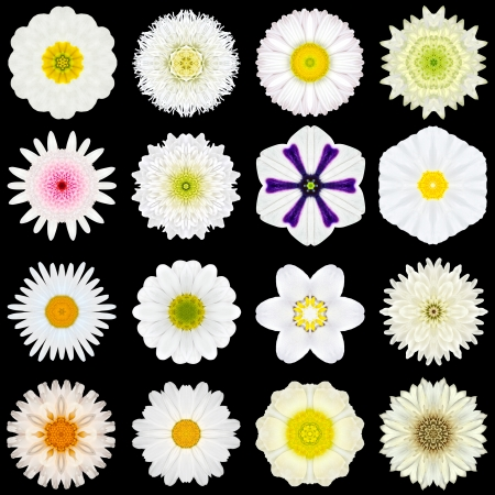 Big Collection of Various White Flowers. Kaleidoscopic Mandala Patterns Isolated on Black Background. Concentric Rose, Daisy, Primrose, Sunflower, Carnation, Marigold, Gerber, Dahlia Zinnia Flowers in Yellow and White colors. photo