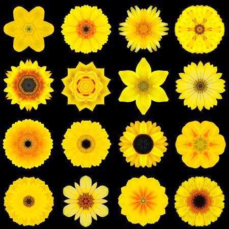 Big Collection of Various Yellow Flowers. Kaleidoscopic Mandala Patterns Isolated on Black Background. Concentric Rose, Daisy, Primrose, Sunflower, Carnation, Marigold, Gerber, Dahlia Zinnia Flowers in Yellow colors. photo