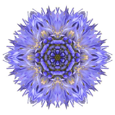 fiordaliso: Blu Fiordaliso Mandala Flower. Caleidoscopio di Centaurea cyanus isolato su sfondo bianco