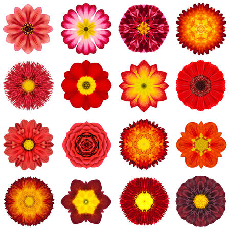 Big Collection of Various Red Concentric Pattern Flowers. photo