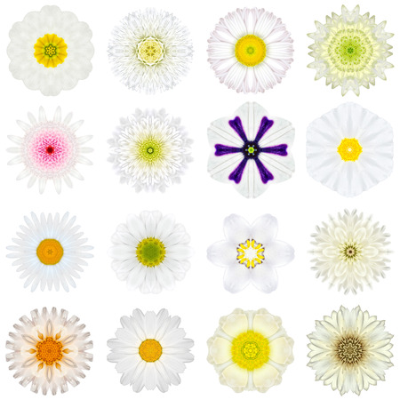 Big Collection of Various White Concentric Pattern Flowers. photo