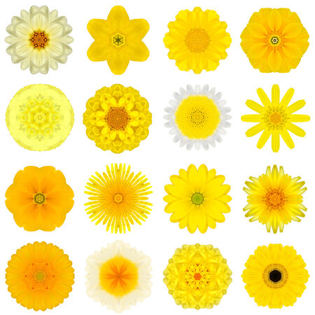 Big Collection of Various Yellow Concentric Pattern Flowers. photo