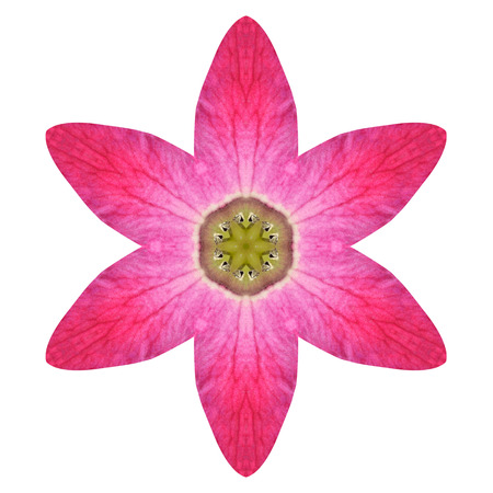 circulos concentricos: Purple Lily caleidoscópica Mandala de la flor aislada sobre fondo blanco. Hermosa Modelo natural con espejo