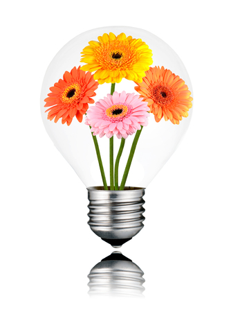 green house effect: Light Bulb with Four Gerber Flowers Growing Inside. Isolated White Background. Light bulb has a reflection