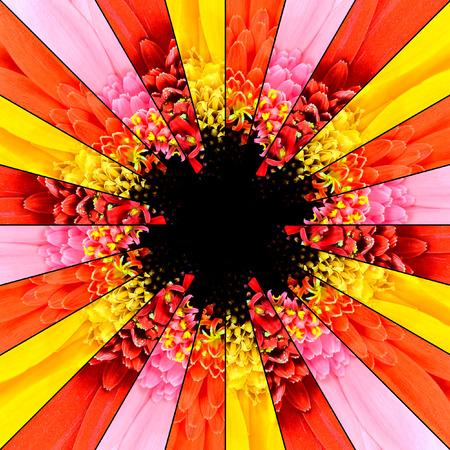 reb: Centro Flor Symmetric collage de colecci�n de Gerbera Flores. Las piezas se seamlesly Dividido en piezas sim�tricas.