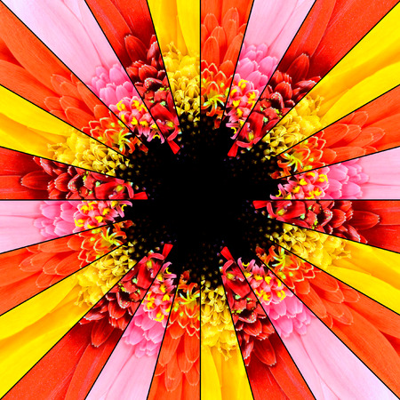 reb: Flower Center Symmetric Collage Made of Collection of Gerbera Flowers. Pieces are Seamlesly Divided into Symmetric pieces. Stock Photo