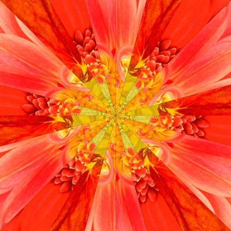 Orange Flower Center Symmetric Collage Made of Collection of Various Wildflowers. Pieces are Seamlessly Divided into 24 Symmetric pieces. photo
