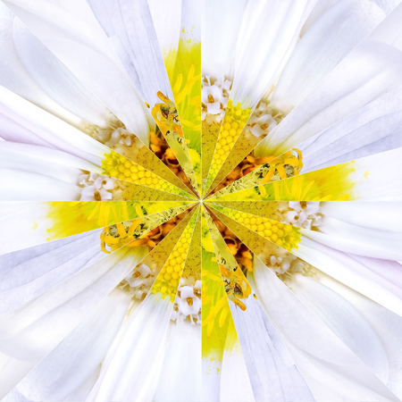 White Flower Center Symmetric Collage Made of Collection of Various Wildflowers photo