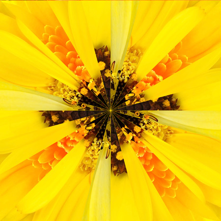 Yellow Flower Center Symmetric Collage Made of Collection of Various Wildflowers photo