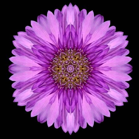 mirrored: Purple Flower Mandala. Kaleidoscopic design Isolated on Black Background. Mirrored pattern Stock Photo