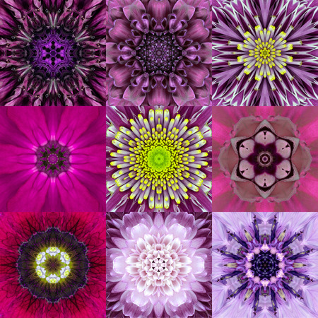 Collection of Nine Purple Concentric Flower Mandalas. Kaleidoscope Concentric design. Full Flower Background Stock Photo