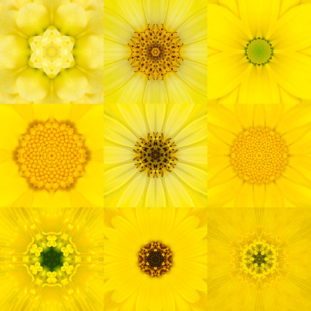 concentric: Collection of Nine Yellow Concentric Flower Mandalas. Kaleidoscope Concentric design. Full Flower Background