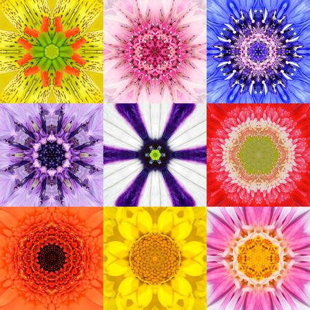 flores moradas: Colecci�n Conjunto de nueve Concentric Flower Mandalas. Fondo De La Flor Encuadre completo en varios colores, amarillo, rosa, naranja, azul, rojo, p�rpura. Dise�o conc�ntrico del caleidoscopio.