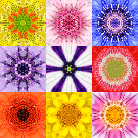 purple floral: Collection Set of Nine Concentric Flower Mandalas. Full Frame Flower Background in Various Colors, Yellow, Pink, Orange, Blue, Red, Purple. Kaleidoscope Concentric design. Stock Photo