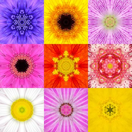 9 つの同心円状の花曼荼羅のコレクションを設定します。様々 な色、黄色、ピンク、オレンジ、ブルー、レッド、パープルのフルフレームの花背景