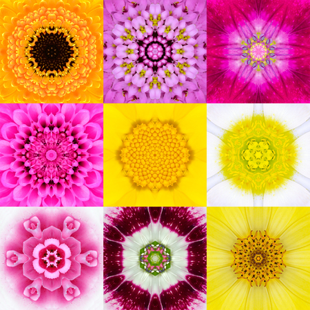 grid pattern: Collection Set of Nine Concentric Flower Mandalas. Full Frame Flower Background in Various Colors, Yellow, Pink, Orange, Blue, Red, Purple. Kaleidoscope Concentric design. Stock Photo