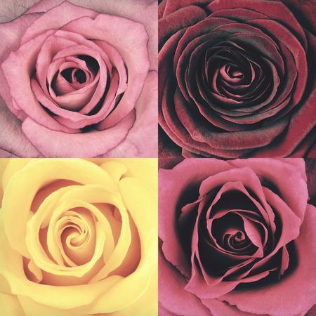 バラ 4 つ花の完全なフレームの背景のマクロ。花がぼろぼろ sheek ヴィンテージやレトロなスタイルです。