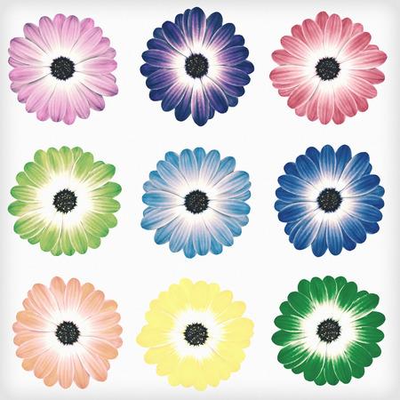 様々 なカラフルなデイジー花 Osteospermum が白い背景に分離されました。花がぼろぼろ sheek ヴィンテージやレトロなスタイルです。