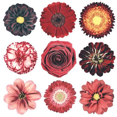 いろいろな花が白い背景で隔離赤いヴィンテージ レトロなスタイルの選択。デイジー、Chrystanthemum、コーンフラワー、ダリア、彼ら、プリムローズ 写真素材