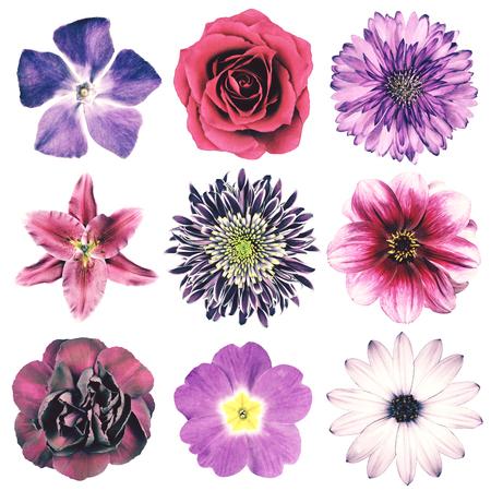 pâquerette: Sélection de diverses fleurs dans le pourpre Rétro Vintage Style isolé sur fond blanc. Daisy, Chrystanthemum, Bleuet, Dahlia, Iberis, Primrose, Gerbera, Rose.