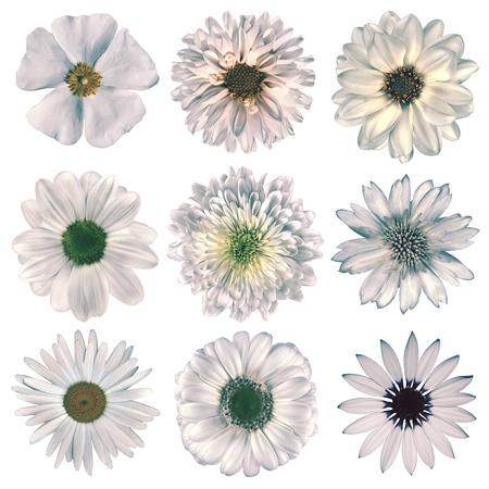 白い背景に分離された白いビンテージ レトロなスタイルで様々 な花の選択。デイジー、Chrystanthemum、コーンフラワー、ダリア、彼ら、プリムローズ