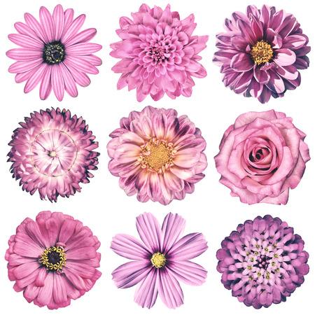 Selectie van verschillende bloemen in roze Vintage retro-stijl op een witte achtergrond. Daisy, Chrystanthemum, Korenbloem, Dahlia, Iberis, Primrose, Gerbera, Rose.