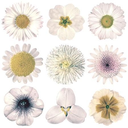 Auswahl Von Verschiedenen Blumen In Rosa Retro-Stil Isoliert Auf ...