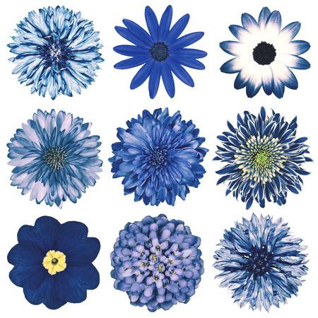 白い背景に分離された青いヴィンテージ レトロなスタイルで様々 な花の選択。デイジー、Chrystanthemum、コーンフラワー、ダリア、彼ら、プリムロー 写真素材