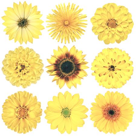 白い背景に分離された黄色ヴィンテージ レトロなスタイルで様々 な花の選択。デイジー、Chrystanthemum、コーンフラワー、ダリア、彼ら、プリムロー