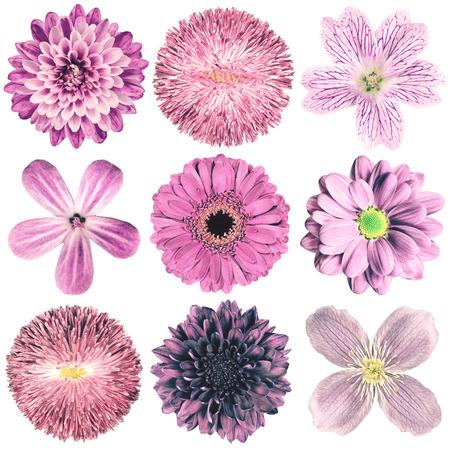 白い背景に分離された紫ヴィンテージ レトロなスタイルで様々 な花の選択。デイジー、Chrystanthemum、コーンフラワー、ダリア、彼ら、プリムローズ 写真素材
