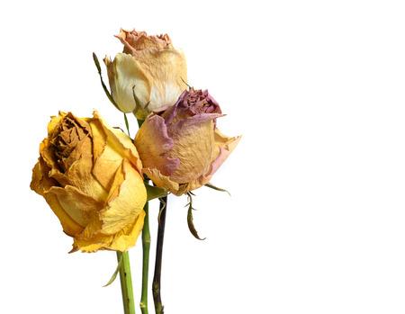 白い背景で隔離の枯れたバラ花を色あせた 3 写真素材