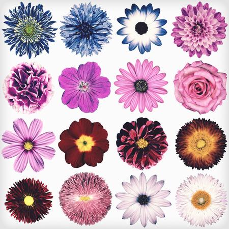 白い背景に分離されたヴィンテージのレトロなスタイルで様々 な花の選択。コレクション ピンク、ブルー、イエロー、レッド、オレンジ、デイジー