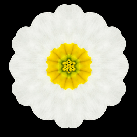 White Flower Mandala. Kaleidoscopic design Isolated on Black Background. Mirrored pattern