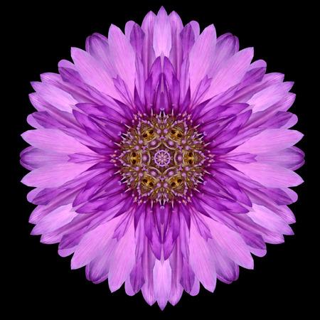 ガーベラの花の紫マンダラ。万華鏡のようなデザインの黒の背景に分離されました。