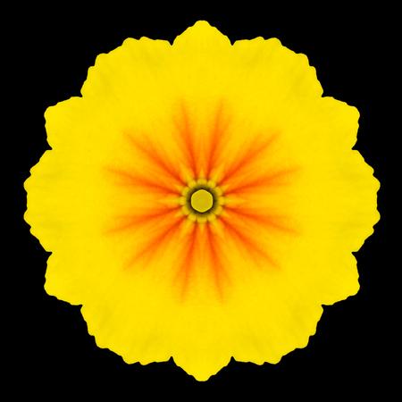 黄色の花曼荼羅。万華鏡のようなデザインの黒背景に分離されました。パターンのミラー化 写真素材