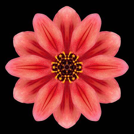 赤い花曼荼羅。万華鏡のようなデザインの黒背景に分離されました。パターンのミラー化