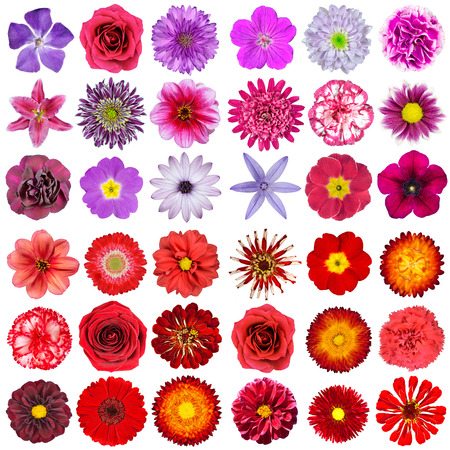 Big Selection of Various Pink, Purple, White and Red Flowers Isolated on White Background