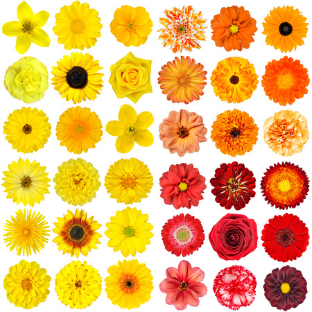 Big Selection of Various Orange, Purple and Red Flowers Isolated on White Background 写真素材