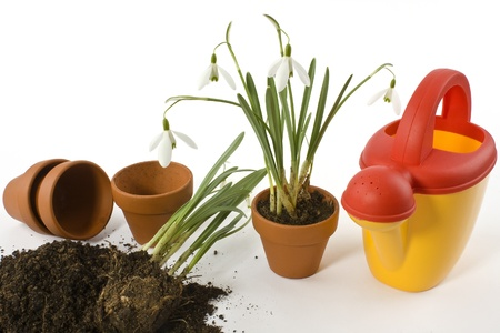 Potting soil, flower pots, watering can and snowdrops on a white background into