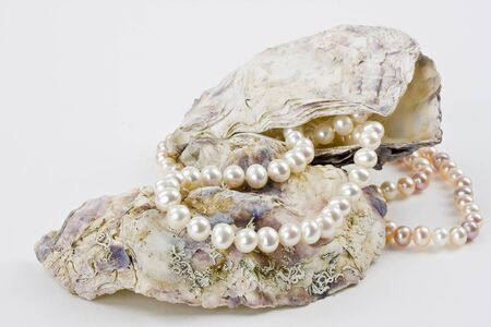 A string of pearls and oyster shells on a white background shown  photo