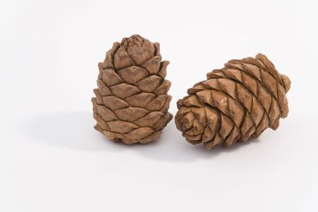 Two cedar cones on a white background shown. Stock Photo