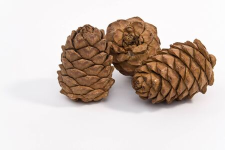 Three cedar cones on a white background shown. Stock Photo