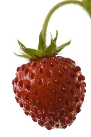 The wild strawberry on a white background macro free.