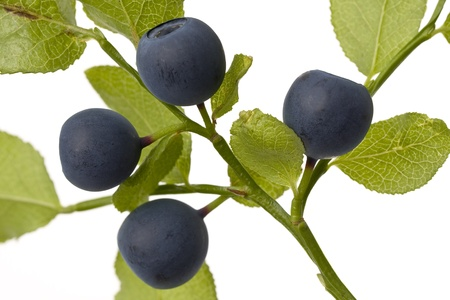 A brunch of blueberries on a white background shown. Stock Photo