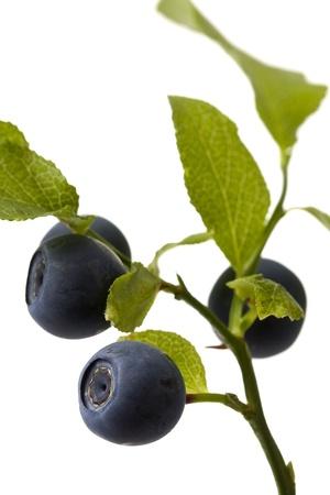 A brunch of blueberries on a white background shown. Standard-Bild